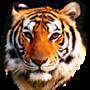 TIGER Z1 Pro – Red